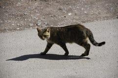 Brown cat Stock Photos