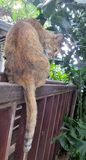 Brown cat dressing on the wood rail in the bright garden in the morning Royalty Free Stock Photography