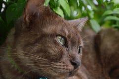 Brown cat in the garden Stock Photos