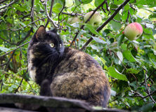 Brown cat in garden. Fluffy brown cat sitting in the garden near the Apple tree Royalty Free Stock Image