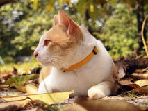 Brown cat in the garden. A brown cat lies down in the garden Royalty Free Stock Image