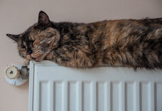 Brown cat lies on the battery at a cold day. Brown cat lies on the battery on a cold day in high quality Stock Images