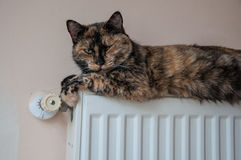 Brown cat lies on the battery at a cold day Stock Photography