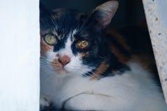 Eyes cat stock image