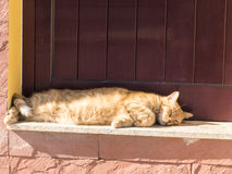 Brown cat lying in the sun on a door ledge. Stock Photo
