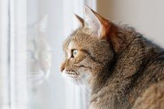 Brown cat portrait Stock Photography