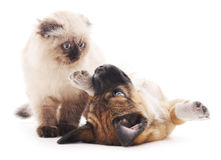 The brown cat and puppy. Royalty Free Stock Images