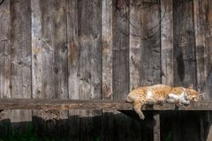 Brown cat relaxes under the sun stock photos