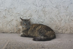 Brown Cat resting on the floor. Street cat laying on the floor royalty free stock image