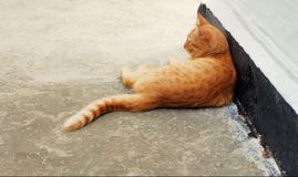 Brown Cat Resting Outdoors. In A Shadow Of The Wall Stock Images