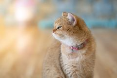 A brown cat sat happily on the floor in the room royalty free stock images
