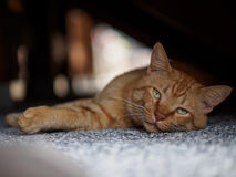 Brown cat in shadow. A brown cat in shadow Stock Photography