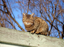 Brown cat sitting on a fence Royalty Free Stock Photo