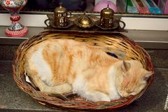 Brown cat sleeping in a basket. In souvenir shop in Istanbul Royalty Free Stock Images