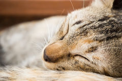 Brown cat sleeping on the floor. Brown cat sleeping on the floor in late morning day Royalty Free Stock Photo