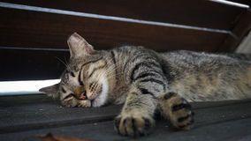 A brown cat is sleeping under the wood bench. Stock Images