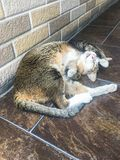 Brown cat sleeping on the walkway stone floor inside the building stock photography