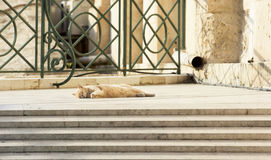 Brown cat in the street Royalty Free Stock Photography