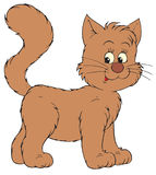 Brown cat (vector clip-art) Stock Images