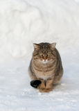 Brown cat on the white snow Stock Photos