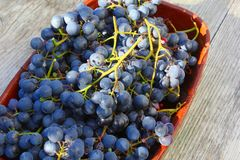 Harvested blue grapes ceramic bowl vintage wood table royalty free stock photo