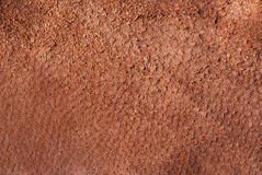 Brown chamois texture. The Image can be used as a background Stock Images