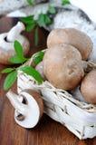 Brown champignon Stock Image