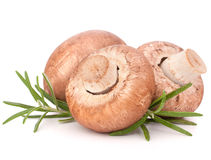 Brown champignon mushroom and rosemary leaves Stock Images