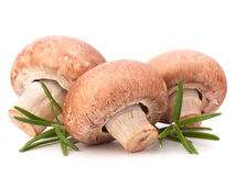 Brown champignon mushroom and rosemary leaves Stock Image