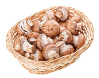 Brown champignon mushrooms in wicker wooden basket Stock Image