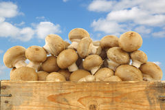 Brown champignon mushrooms in a wooden crate Royalty Free Stock Images
