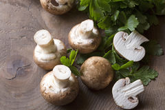 Brown champignons with parsley Stock Photos
