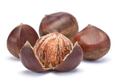 Brown chestnut Royalty Free Stock Image