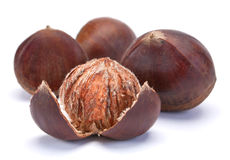Brown chestnut stock image