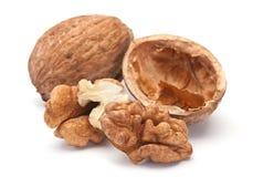 Brown chestnut Stock Photos