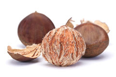 Brown chestnut Stock Photography