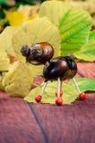 Brown chestnut animal figure Stock Photos