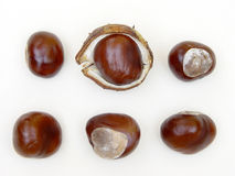 Brown chestnut's eye Stock Photos