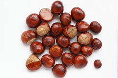 Brown chestnuts Royalty Free Stock Images
