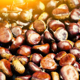 Brown chestnuts Royalty Free Stock Photos