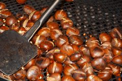 Brown chestnuts, background Royalty Free Stock Image