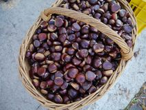 Brown chestnuts in a basket. Brown chestnuts in a braided basket Royalty Free Stock Photography