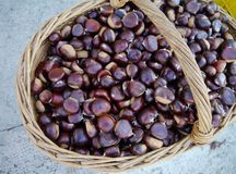 Brown chestnuts in a basket Royalty Free Stock Photo
