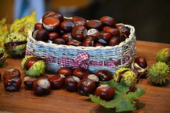 Brown chestnuts Royalty Free Stock Photography