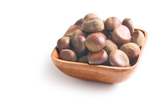 Brown chestnuts Stock Photography