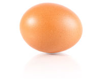 Brown chicken egg. On white background Stock Images