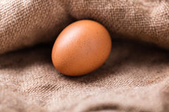 Brown chicken egg closeup Royalty Free Stock Image