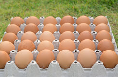 Brown chicken egg Royalty Free Stock Image