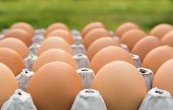 Brown chicken egg Stock Photo