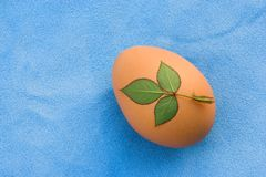 Brown chicken egg and leaves Stock Photos